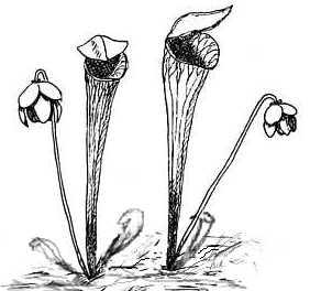 carnivorous plants coloring pages | Carnivorous Plants Coloring Pages Coloring Pages